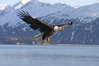 bald eagle cover photo credit USDA NRCS
