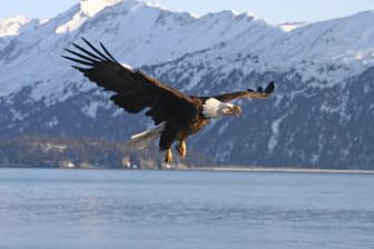 bald eagle cover photo credit USDA NRCS