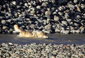 wolfcrossingwater