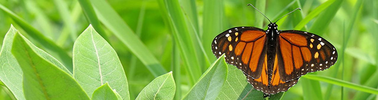 monarchslide