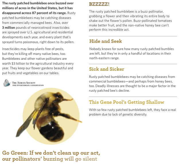 Rusty Patched Bumblebee | Endangered Species Coalition