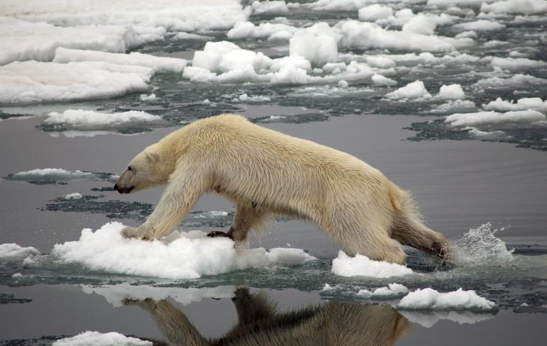 polarbearvanishingreport