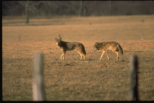 Petition Filed With U S  Fish and Wildlife Service Seeking