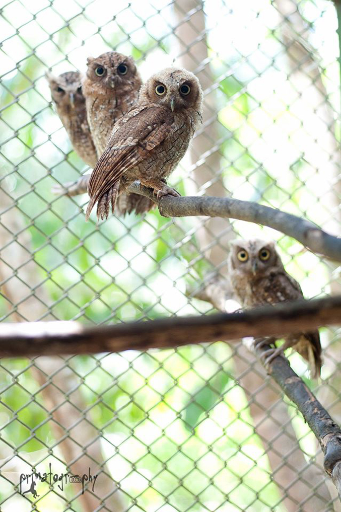 These four beautiful owls arrived at the rescue center as babies and were later released successfully into the wild.
