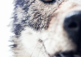 wolfprofile