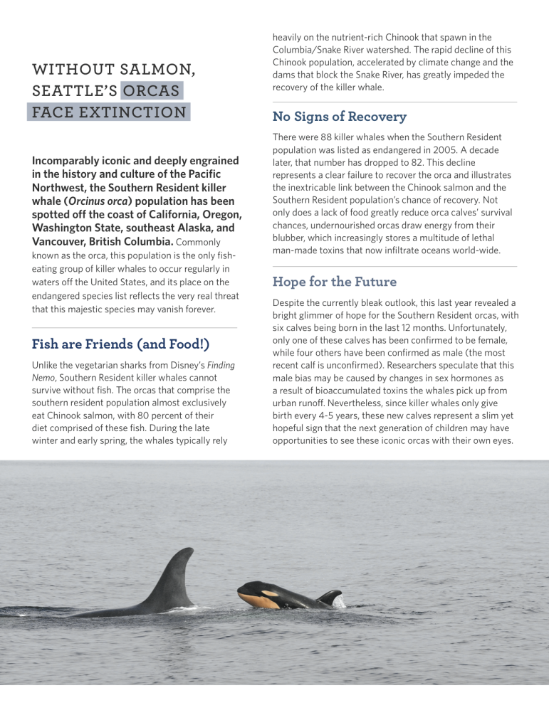 Orca Profile