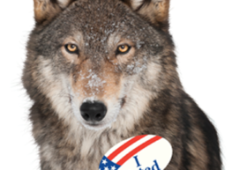 wolvesvoted