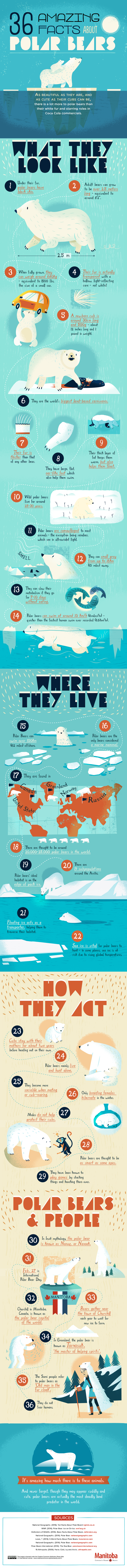 36 facts about polar bears