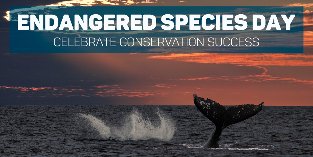 species day species coalition