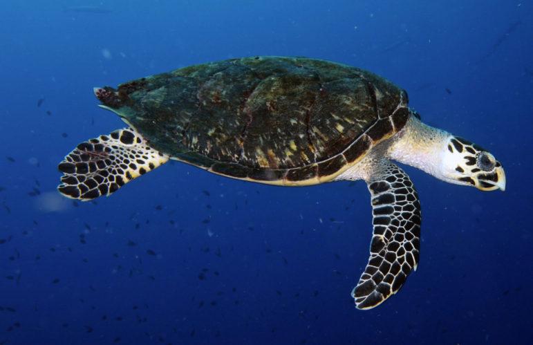 Photo credit NOAA