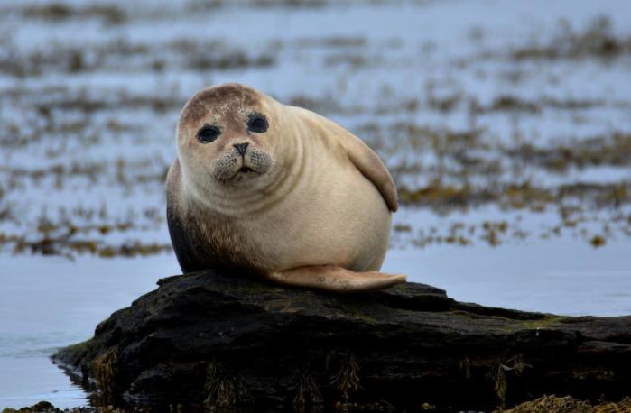 Blog | Endangered Species Coalition | Page 7