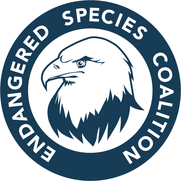 We've had the fortune to receive support and creative advice from Tom Sachs for our organization. Tom's studio redid the Endangered Species Coalition logo. Tom chose the Navy's blue color, ensuring that the logo has longevity. He also feels it's important that the eagle be assertive, reflecting our group's grassroots mobilization approach. We love that our eagle logo is a symbol of the recovery of an iconic species and the success of the Endangered Species Act. And we're grateful to Tom and his studio for the support for imperiled wildlife.