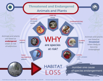 Infographic detailling why threatened and endangered animals and plants are at risk