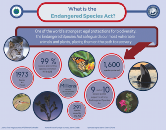 Infographic describing what the purpose and results of the Endangered Species Act are