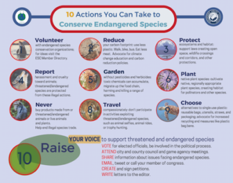 Infographic detailing 10 actions that you can take to conserve endangered species